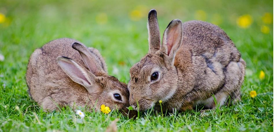 Chasing Rabbits…..and Squirrels!